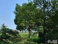 世茂铜雀台小区图片