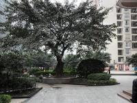 海棠晓月生活馆