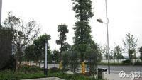 泽科港城国际小区图片
