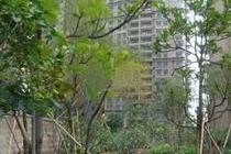 中海金沙馨园